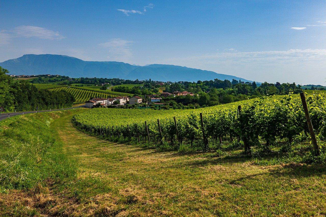 Vinos italianos: cuál probar y dónde